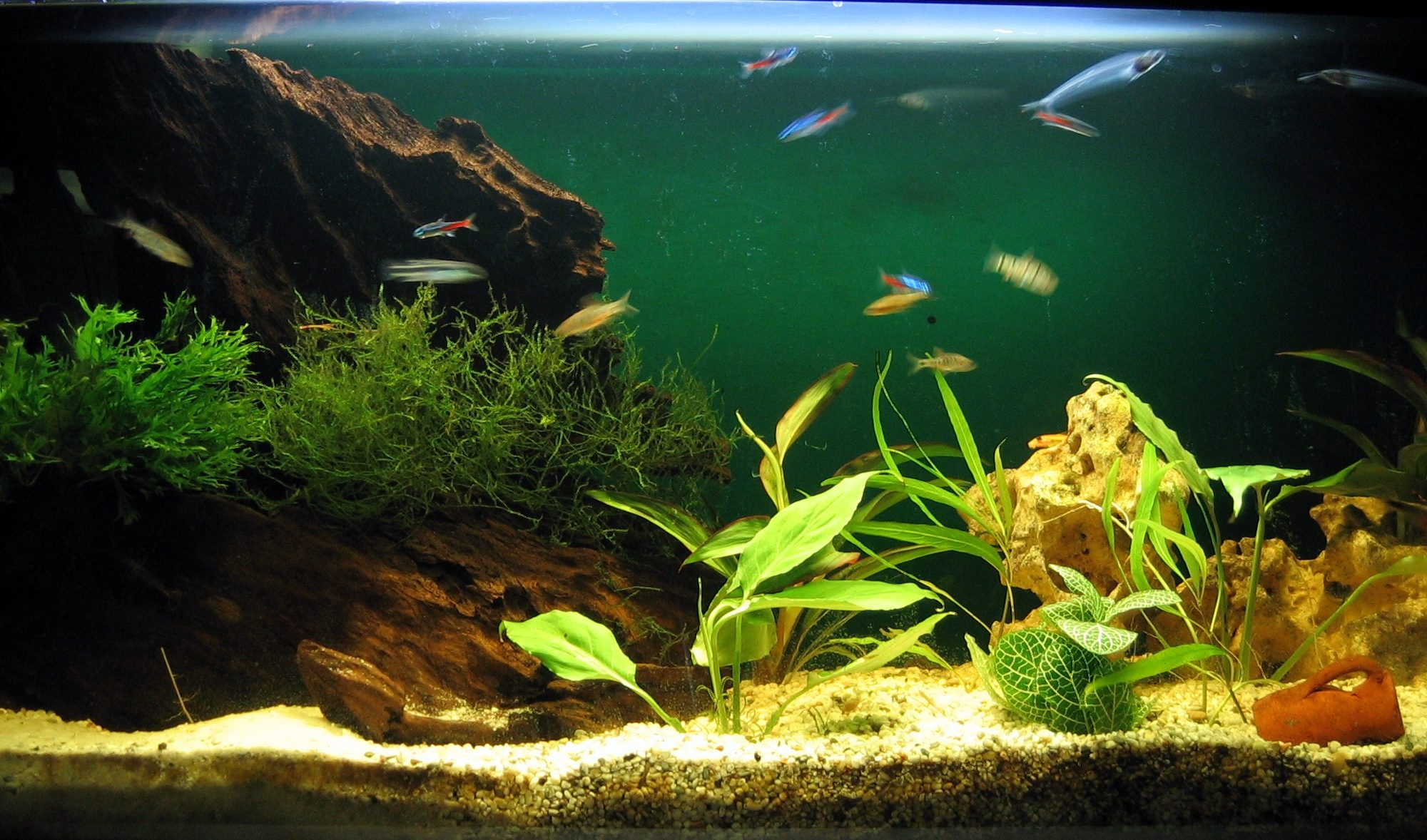 Aquariumdeco with root and stone